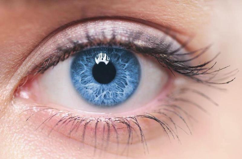 Единственная часть тела, которая не имеет кровоснабжения, — роговица глаза. Кислород она получает непосредственно из воздуха.