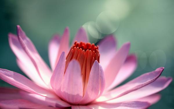Сердце как цветок фото